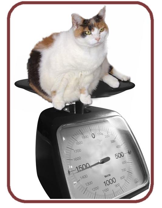 gato pesado