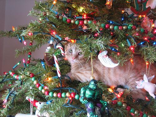 arvore-natal-gatos